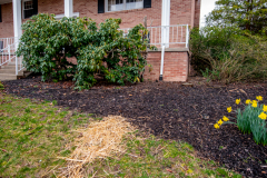 Gutter lead off, French drain, and landscaping from D-Bug Waterproofing