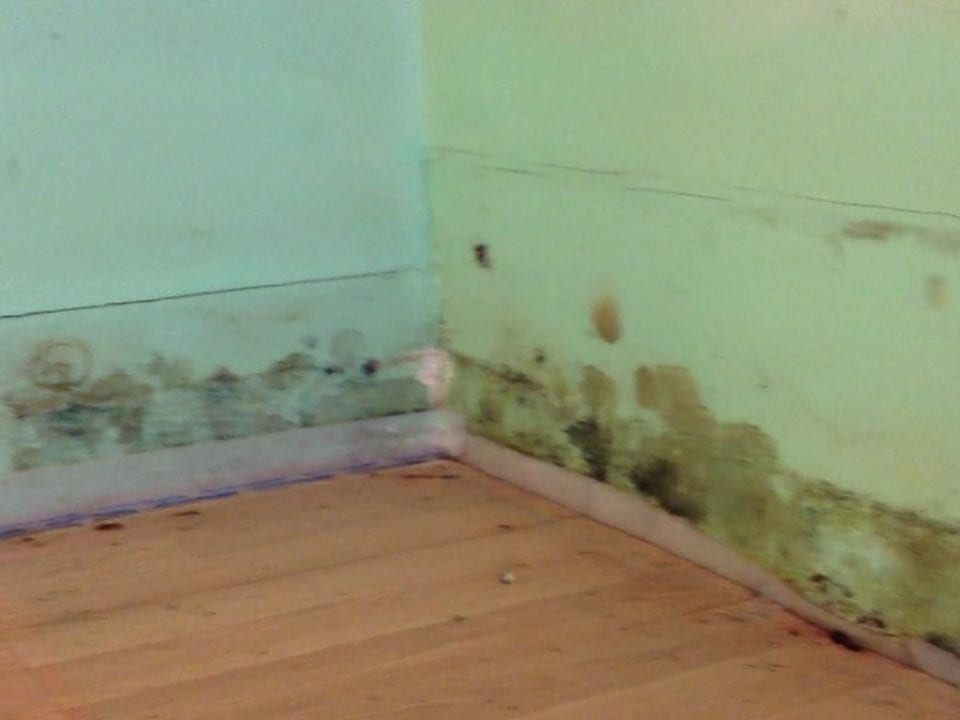 Moldy wall boards ready to be removed and replaced by D-Bug Waterproofing