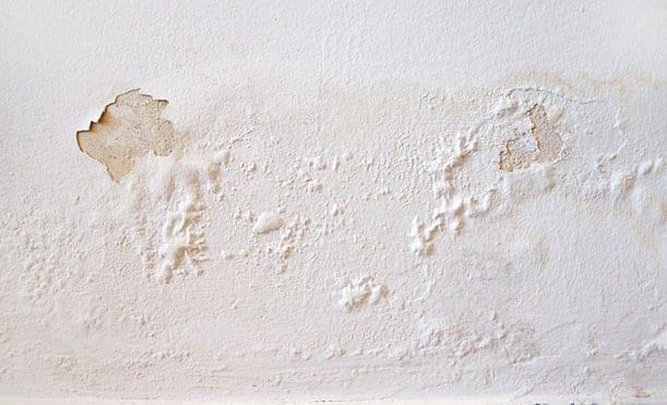 D-Bug Waterproofing can fix spring leak water damage