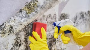 Mold Remediation from D-Bug Waterproofing